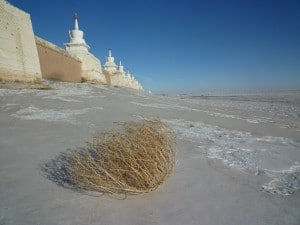 The Erdene Zuu Monastery is one of the oldest Buddhist monasteries operating in Mongolia
