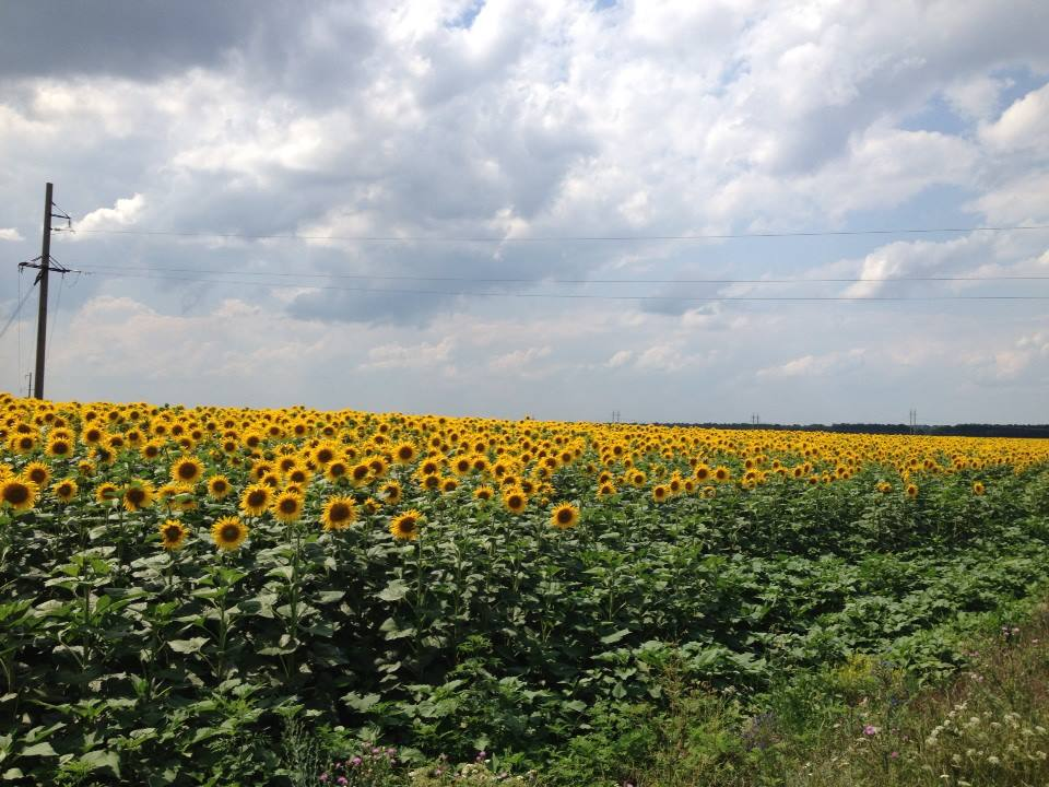 The Ukrainian countryside around the Pervomaysk missile base is an endless, breathtaking sea of sunflowers.