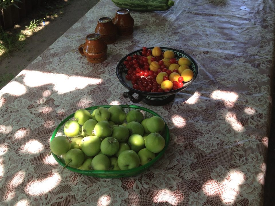 The fruits of my labor in the garden (literally): яблоки, вишни, и абрикосы (apples, cherries, and apricots)