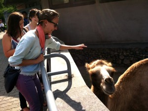 About to touch the camel that came close to the edge of the exhibit!